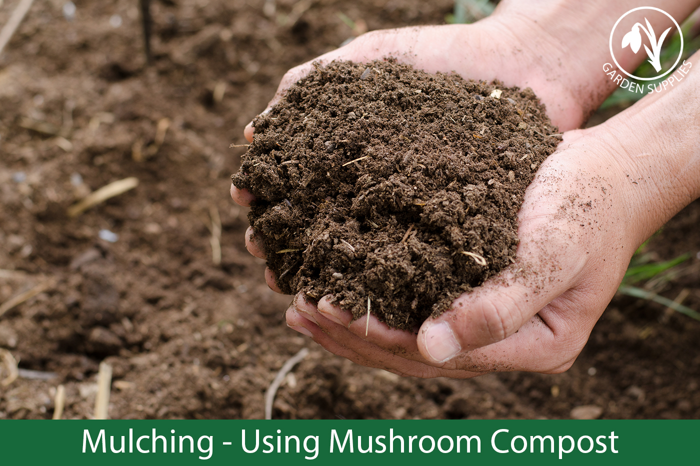 Mulching – Using Mushroom Compost
