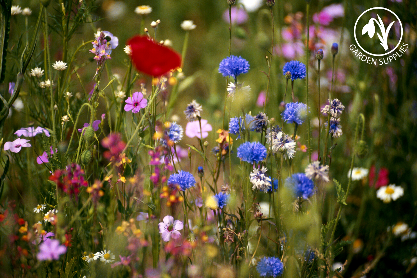 Native Wildflowers & their Impact
